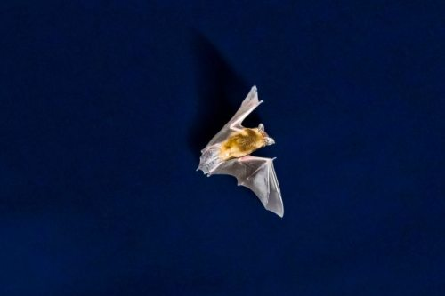 Animals Bats ©PictureAlliance_dpa fledermaus