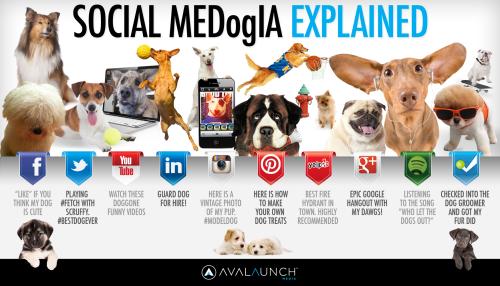 social-medogia-explained_51d19e0f8105d